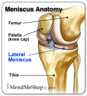 Knee joint, lateral meniscus anatomy